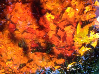 Leaves in water w shadow
