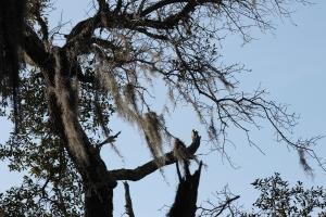 hairy branch