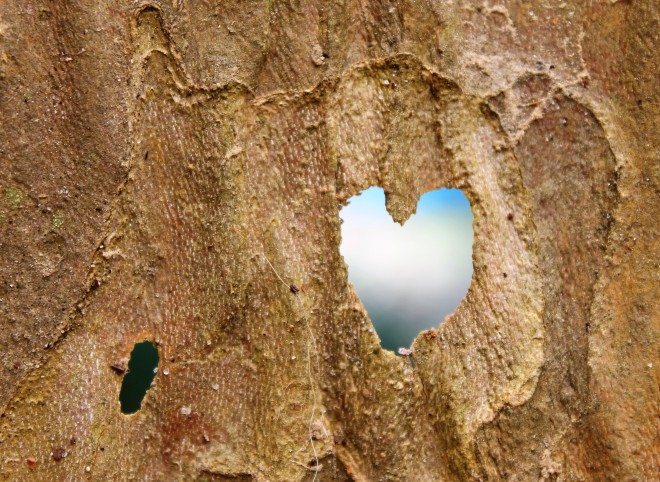 heart-in-bark-w-blue