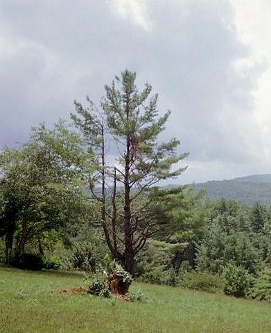 Boone Hillside w trees (3).jpg